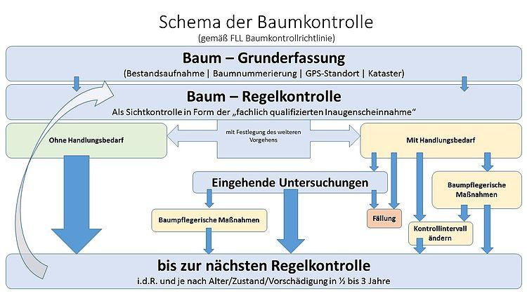 Schema der Baumkontrolle
